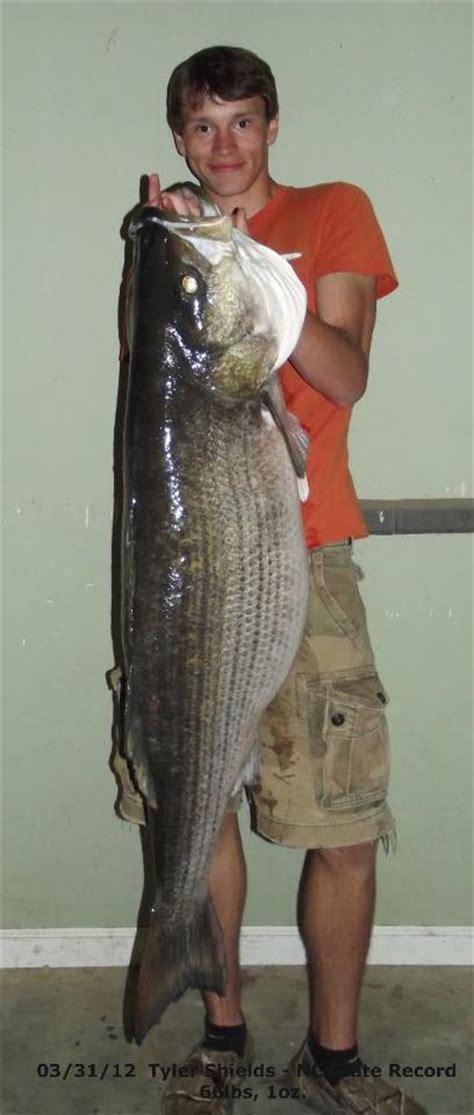 11 great fishing spots in south carolina jpg 408x960