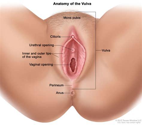 The vagina vulva female anatomy pictures, parts jpg 600x528